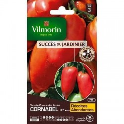 Tomate Cornue des Andes CORNABEL HF1 - VILMORIN