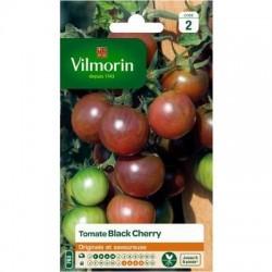 Tomate BLACK CHERRY - VILMORIN