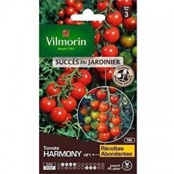 Tomate Coktail Ronde HARMONY HF1 - VILMORIN