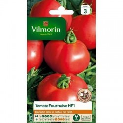 Tomate  FOURNAISE HF1 - VILMORIN