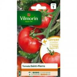 Tomate SAINT PIERRE - VILMORIN