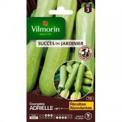 Courgette ADRIELLE HF1 - VILMORIN