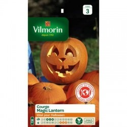 Citrouille (courge) MAGIC LANTERN - VILMORIN