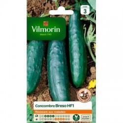 Concombre BRESO HF1 - VILMORIN