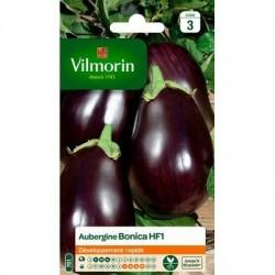 Aubergine BONICA HF1 - VILMORIN