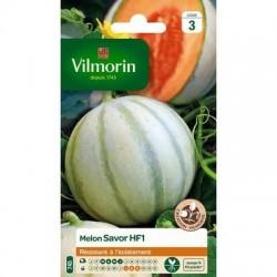 Melon SAVOR HF1 - VILMORIN