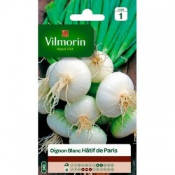 Oignon Blanc Hâtif de PARIS - VILMORIN