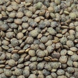Lentille verte ANICIA - Graines triées