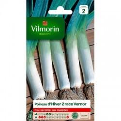 Poireau d'hiver 2 Race VERNOR - VILMORIN