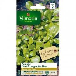 Pourpier Doré à larges feuilles - VILMORIN