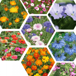 Couverts CHAMPS FLEURIS® Longue floraison non traité