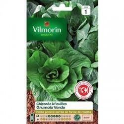 Chicorée à feuilles GRUMOLO VERDE - VILMORIN