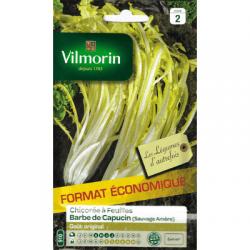 Chicorée à feuilles BARBE DE CAPUCIN Amère - VILMORIN