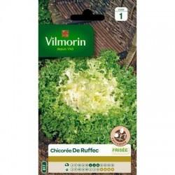 Chicorée Frisée DE RUFFEC - VILMORIN