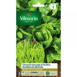Chicorée à feuilles Améliorée BLONDE Sauvage - VILMORIN
