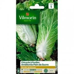 Chicorée à feuilles Améliorée PAIN DE SUCRE - VILMORIN