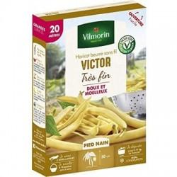Haricot beurre sans fil VICTOR - VILMORIN