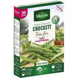Haricot vert sans fil CROCKETT - VILMORIN