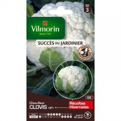 Chou-fleur CLOVIS HF1 - VILMORIN