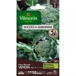Chou Brocoli VERDIA HF1 - VILMORIN