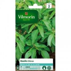Basilic Citron - VILMORIN