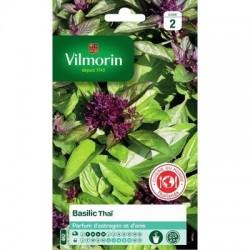 Basilic THAÏ - VILMORIN
