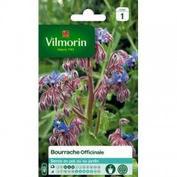 Bourrache Officinale - VILMORIN