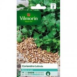 Coriandre Cultivée - VILMORIN