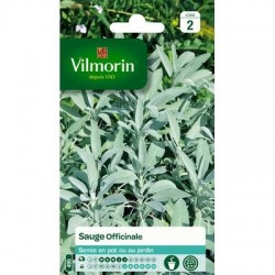 Sauge Officinale - VILMORIN