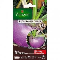 Navet PLESSIS HF1 - VILMORIN