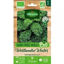 Chou Frisé (Kale) WESTLANDSE WINTER BIO - VILMORIN