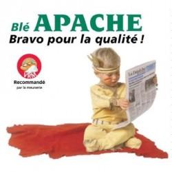 Blé tendre APACHE VIBRANCE - ATTACK - LATITUDE