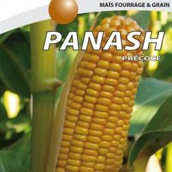 Maïs très précoce PANASH REDIGO