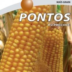 Maïs demi-précoce PONTOS non traité