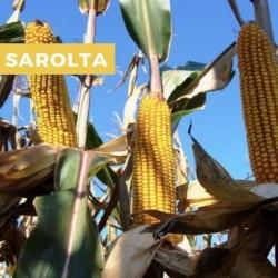 Maïs précoce SAROLTA MAXIM XL 035 FS