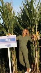 Maïs précoce HULK PROTECTOR