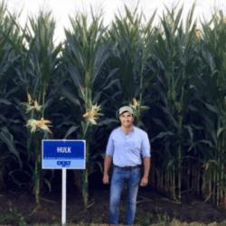 Conditionnement Maïs précoce HULK PROTECTOR