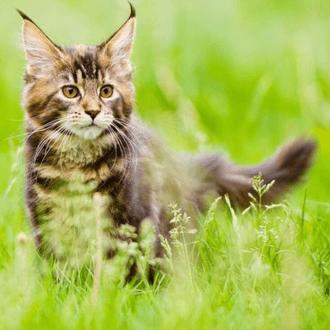 Animalerie - Chat