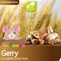 Blé tendre GERRY VIBRANCE GOLD