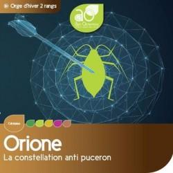 Orge 2R ORIONE VIBRANCE GOLD
