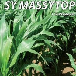 Maïs demi-précoce SY MASSYTOP Traité REDIGO M